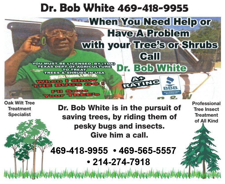 BW Insect Control And Tree Care